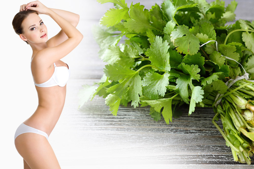 Cilantro Leaves Juice for Weight Loss