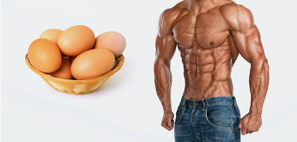 Eggs Helps Bodybuilders for Quick Muscle Growth
