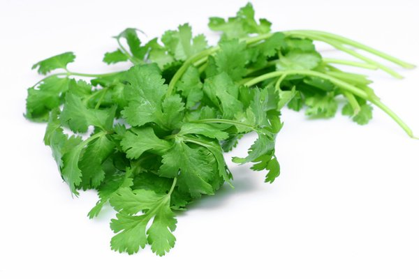 Health Benefits of Cilantro Leaves