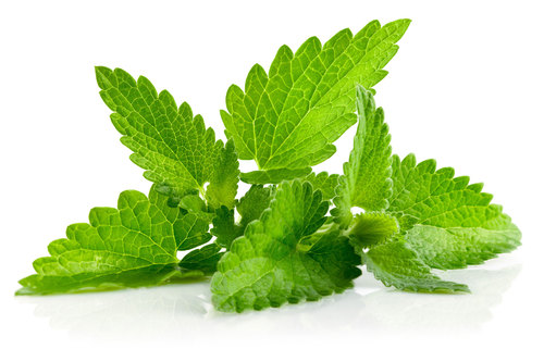 health benefits of mint plant leaves
