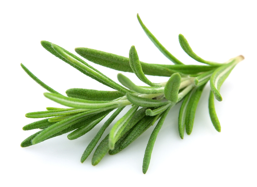 Health Benefits of Rosemary Leaves