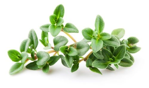 Health Benefits of Thyme Herb Leaves