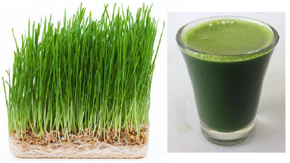 Health Benefits of Wheatgrass Juice