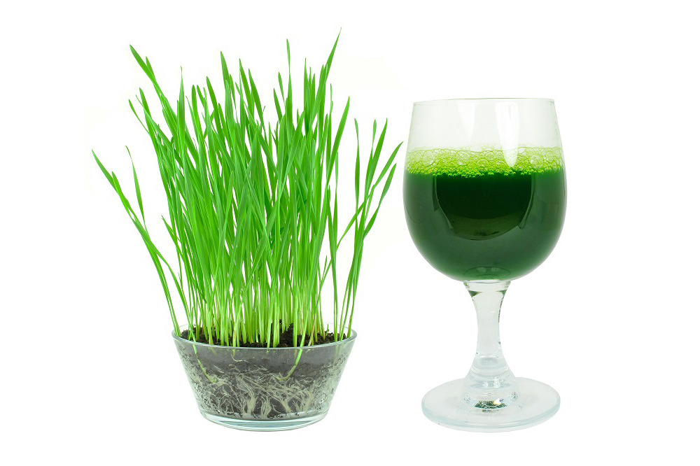 Is it Good to Drink Wheatgrass Juice Everyday