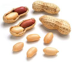 groundnut peanuts