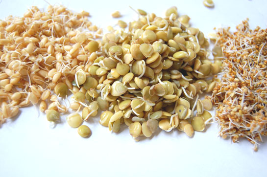Why Sprouted Grains are more Nutritious