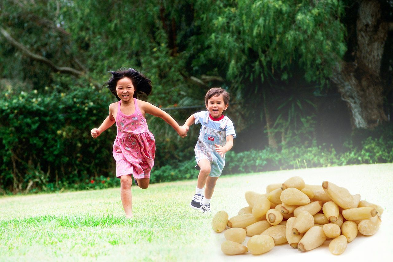 Health Benefits of Pine Nuts for Children